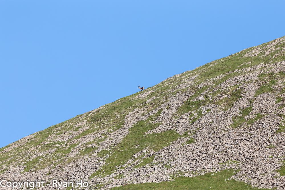 Lone Deer